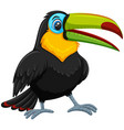 cute toucan white background vector image