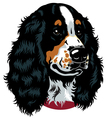 english cocker spaniel head vector image vector image