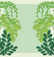plants monstera leaves foliage nature decoration vector image vector image