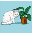 white cat and a pot vector image