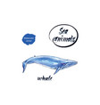 blue whale watercolor vector image