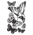British butterflies vintage vector image