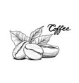 coffee beans with leaves drink banner food vector image vector image