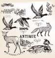 collection hand drawn animals and flourishes vector image vector image