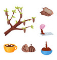 design of cocoa and beans sign collection vector image