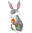 a rabbit eating carrot vector image
