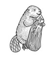 beaver and tree sketch vector image
