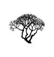 hand drawn plant clip art vector image