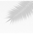 palm branch leaf overlay effect transparent shadow vector image vector image