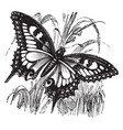 swallowtail butterfly vintage vector image vector image
