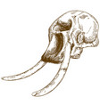 engraving drawing of mammoth skull vector image vector image