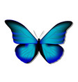 morpho butterfly blue morph on white background vector image