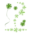 Beautiful Foxtail Fern Leaves on White Background vector image