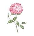 Single hortensia flower vector image vector image