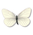 white butterfly on white background with shadow vector image vector image