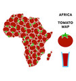africa map collage of tomato vector image vector image