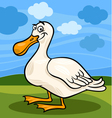 duck bird farm animal cartoon vector image vector image