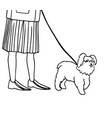 small dog walk on a leash vector image