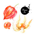 watercolor hand drawn physalis berry fruit vector image vector image