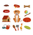 different accessories for domestic pet dog in vector image vector image