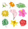 flat set of different flowers and green vector image vector image