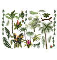 jungle trees and flowers isolated vector image vector image