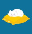 white cat sleeps on pillow sleeping kitten pet vector image