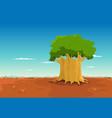 baobab inside african desert vector image