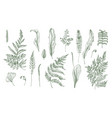 Fern realistic collection hand drawn sprouts vector image