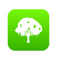 pear tree with pears icon digital green vector image vector image