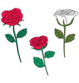 set of rose vector image vector image