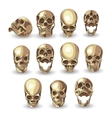 skull set on white background vector image vector image
