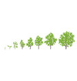 tree growth stages ripening vector image vector image