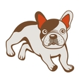 French bulldog vector image
