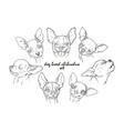 dog breed chihuahua set vector image