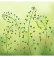 Blindweed vector image
