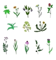 set of medical plants vector image vector image