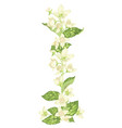 vertical decor elements with jasmine flowers vector image vector image