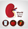 world kidney day card health food water care vector image