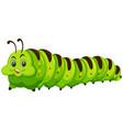 cute happy green catapillar vector image