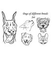 dogs of different breeds set vector image vector image