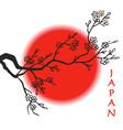Japan flag Sakura and sun vector image vector image