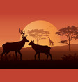 silhouette animals on evening at savanah vector image vector image