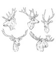 wild elk deer with antlers sketch vector image