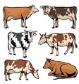 farm cows dairy cattle in cartoon style vector image