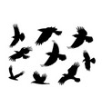 set of silhouette flying raven bird with no leg vector image