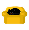 black cat on yellow armchair home pet on chair vector image