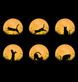 collection cat silhouette with full moon vector image vector image