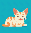 cute cat sleeping of a kitten vector image