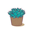 decoration plant succulent polyphilla for vector image vector image